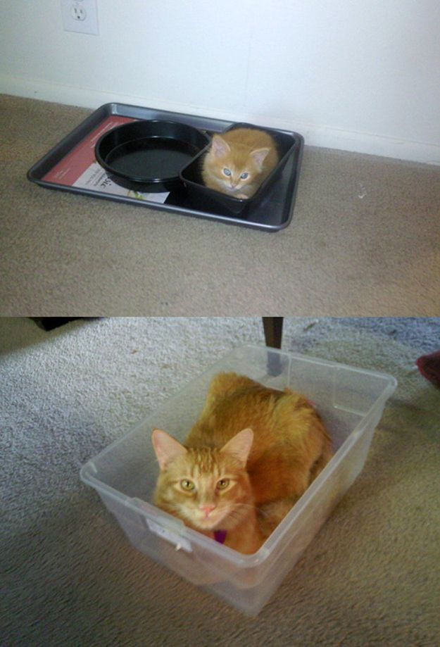 Cats Then and Now (22 pics)