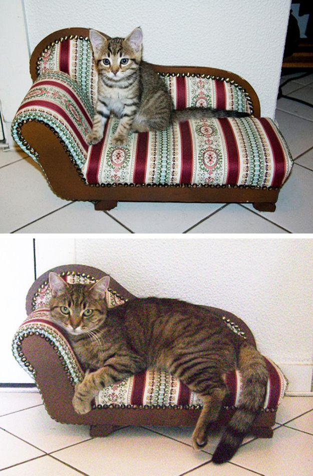 Cats then and now 22 pics for Cat chaise longue