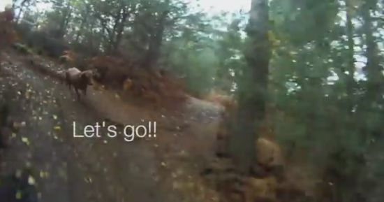 Mountain Biking Downhill Filmed By Dog