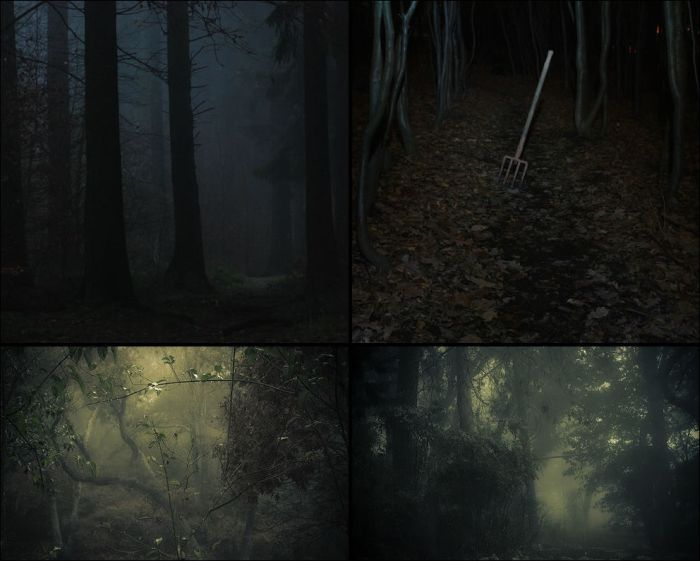 Scary Woods (54 pics)