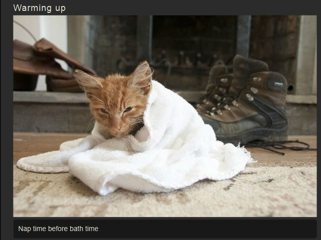 Recovery of a Kitten (11 pics)