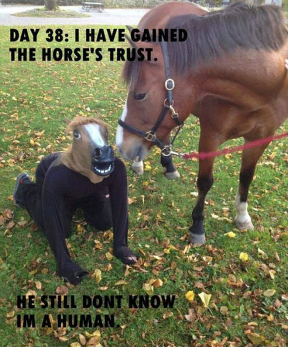 Just Horsing Around (41 pics)