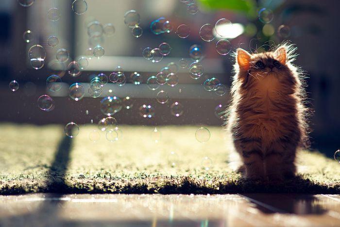 Very Cute Kitten (17 pics)