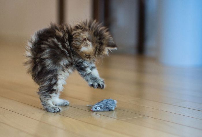 Very Cute Kitten (17 pics)