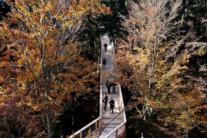 The Longest Tree Top Walk in the World (18 pics)