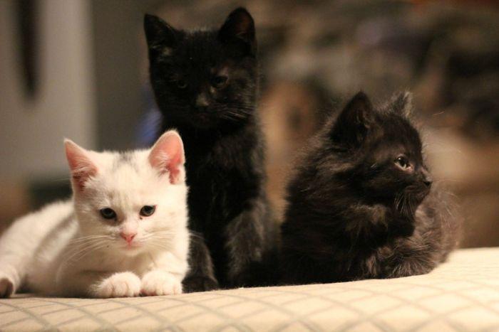 Cats Caught Staring (7 pics)