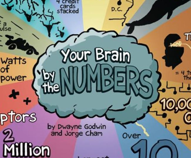 Your Brain by The Numbers (infographic)