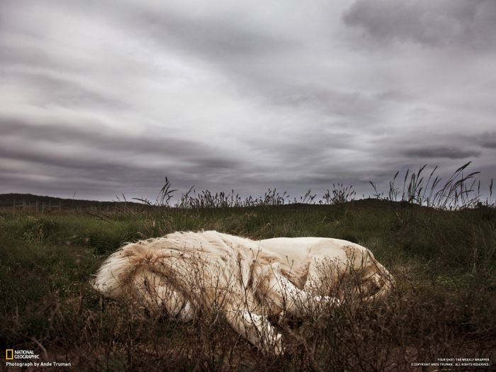 Beautiful Pictures by National Geographic (46 pics)