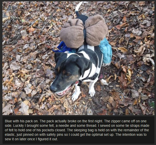 DIY Dog Backpack (11 pics)