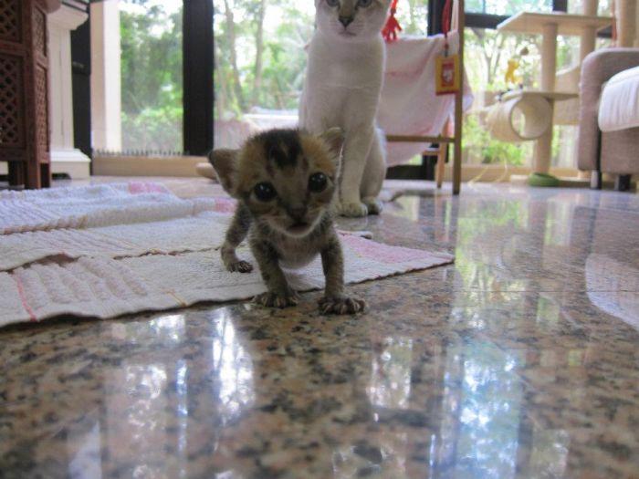 Rescued Kitten (27 pics)