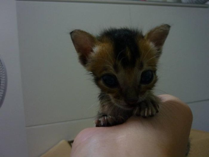 Rescued Kitten (27 pics)