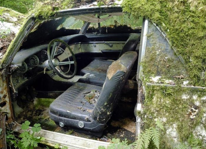Car Cemetery in a Forest (30 pics)