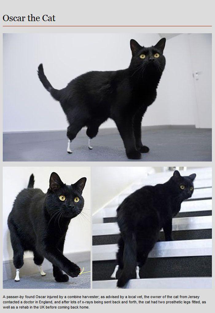Animal Prosthetics (8 pics)