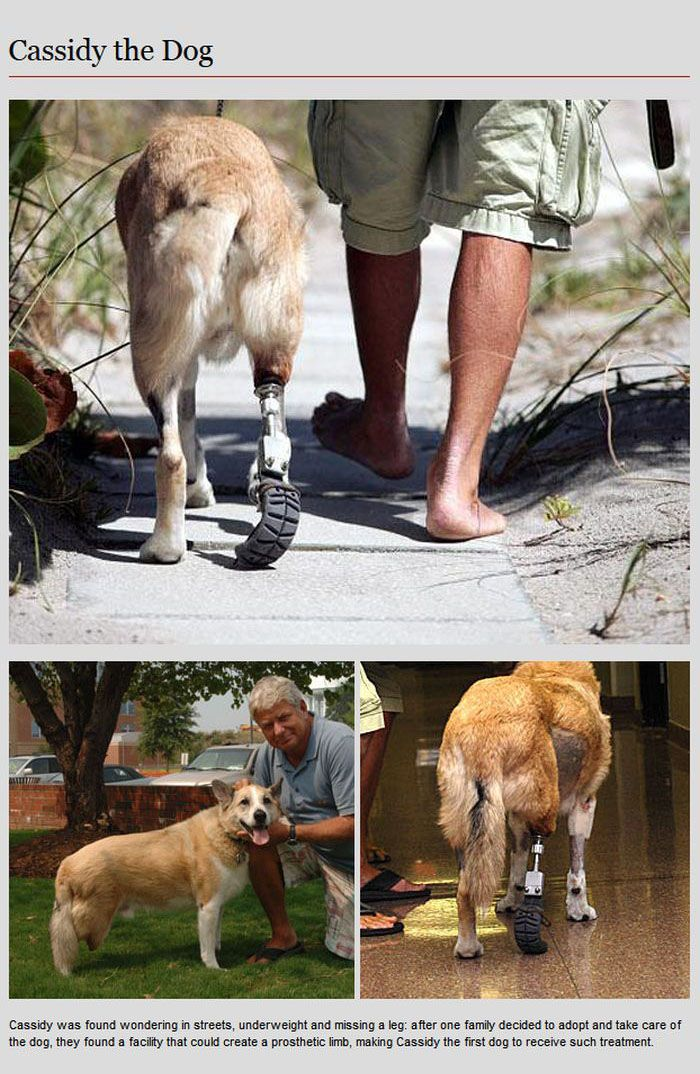 Animal Prosthetics (8 pics)