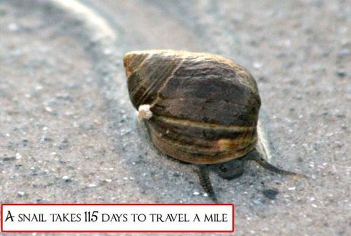 Interesting Facts That Are Useless (30 pics)