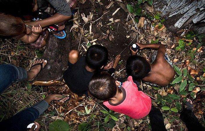 Children in Cambodia Eat Spiders (14 pics)