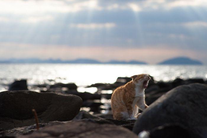 Cat Heaven Island in Japan (50 pics)