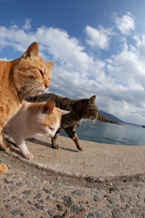 Cat Heaven Island in Japan (50 pics)