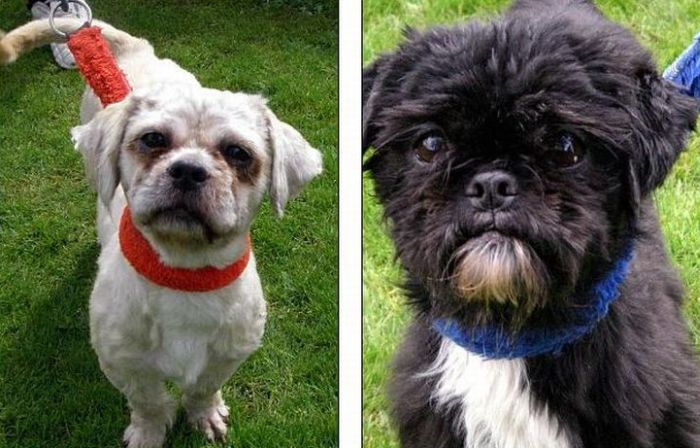 Dogs Before and After the Adoption (4 pics)