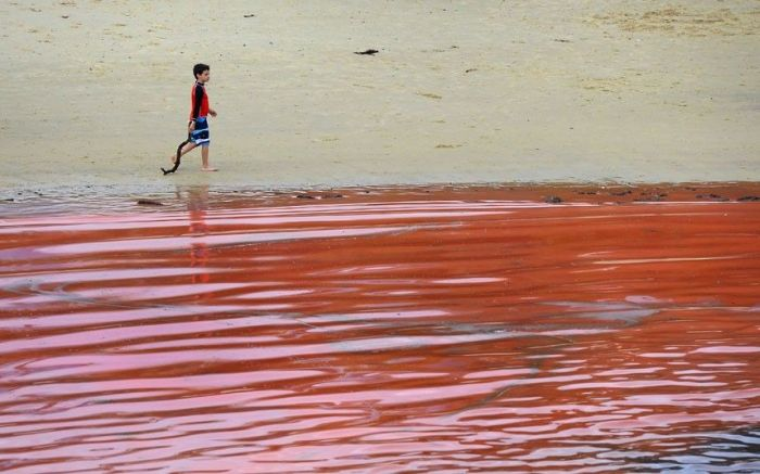 Red Beaches in Sydney, Australia (10 pics)