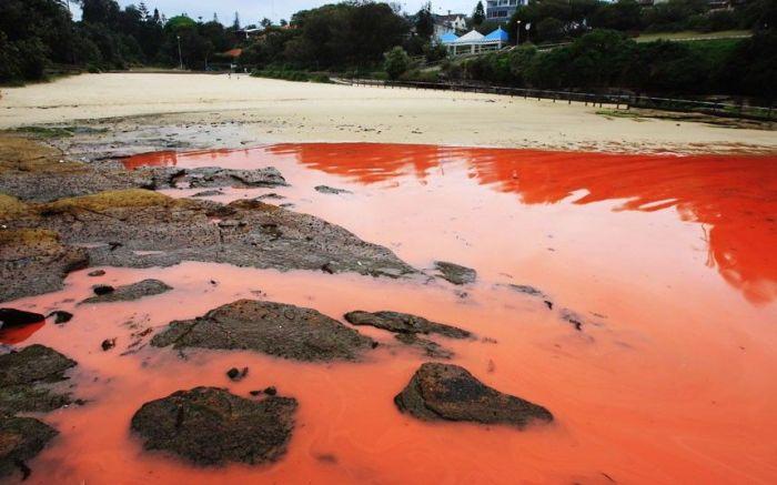 Red Beaches in Sydney, Australia (10 pics)