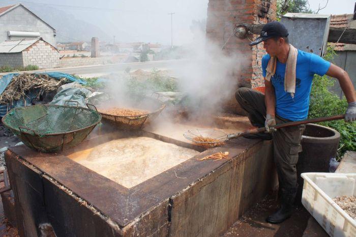 Shrimp Factory in China (8 pics)