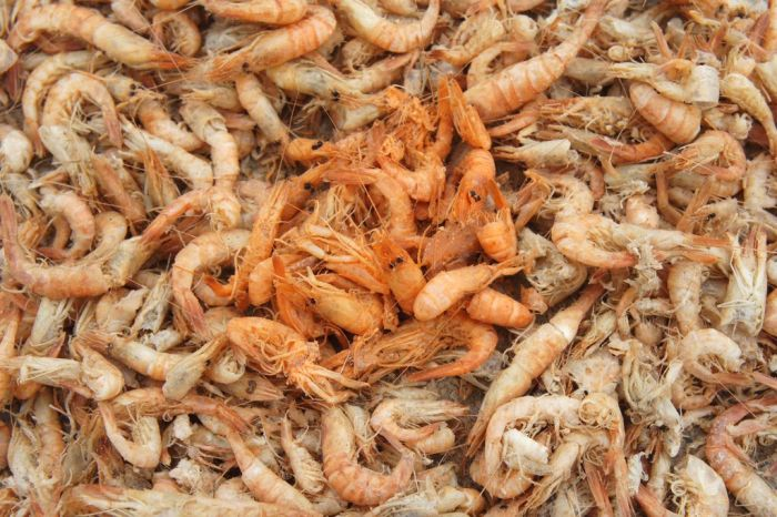 Shrimp Factory in China (8 pics)
