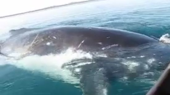 Giant Whale Playing With a Small Boat