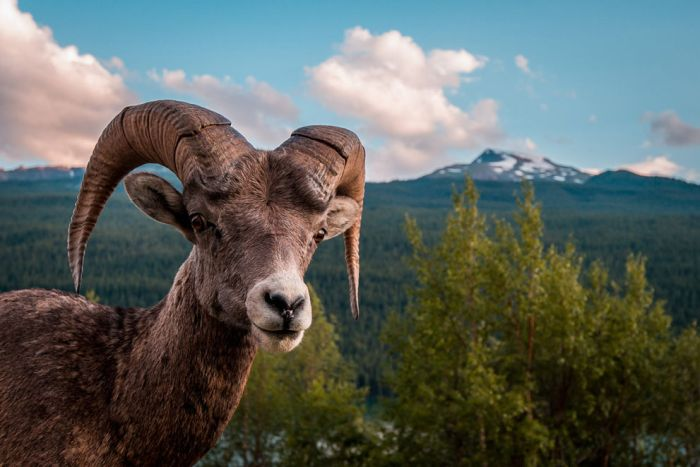 National Geographic Photo Contest 2012. Part 3 (50 pics)