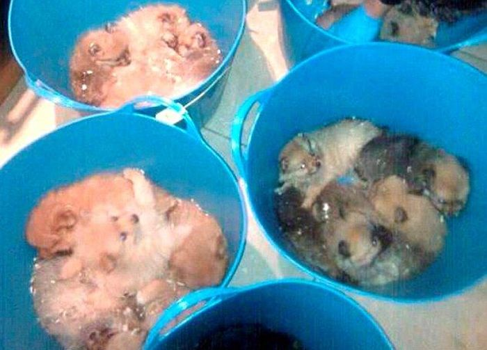 Puppy Smugglers Arrested (5 pics)