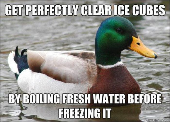 Actual Advice Mallard Meme (22 pics)