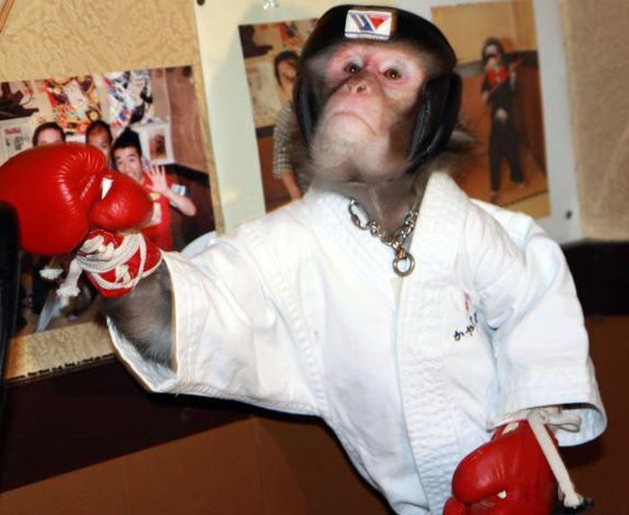 Combat Monkey Training (10 pics)