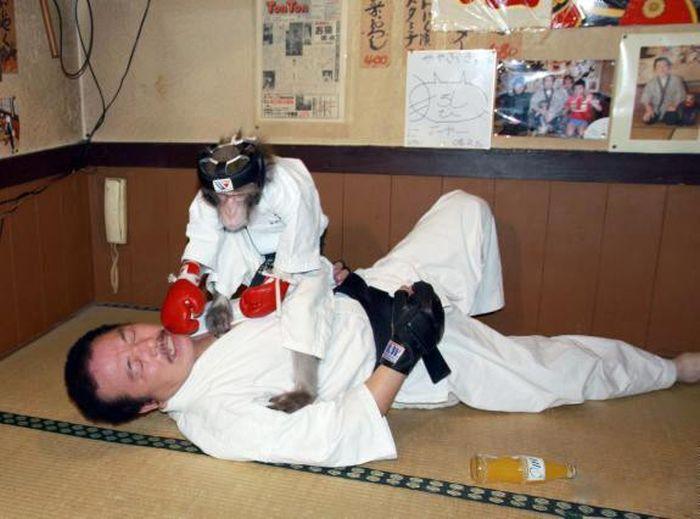 Combat Monkey Training (10 pics)