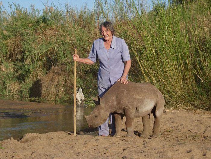 Pet Rhino (13 pics)