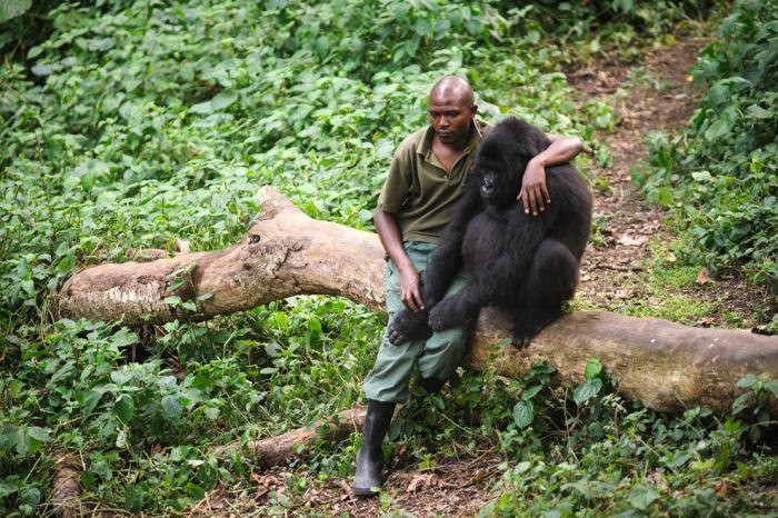 The Best Animal Photos Of 2012 (50 pics)