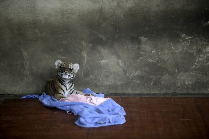 The Best Animal Photos Of 2012 (50 pics)