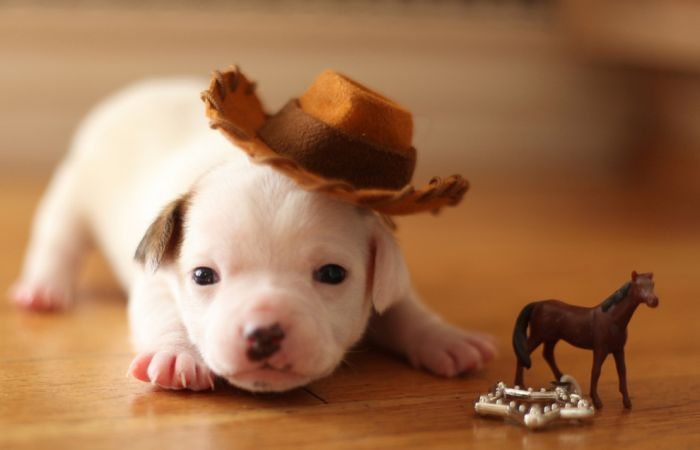 The Cutest Baby Animal Pictures of 2012 (45 pics)