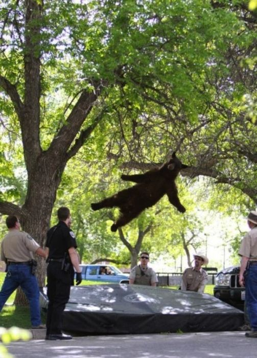The Most Perfectly Timed Photos Of 2012 (27 pics)