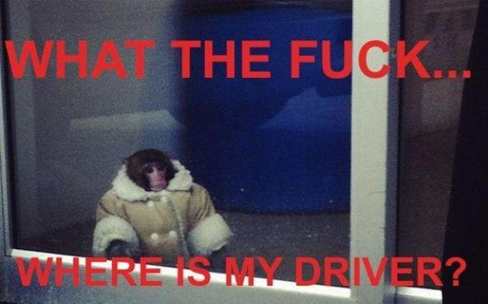 Ikea Monkey (20 pics + video)