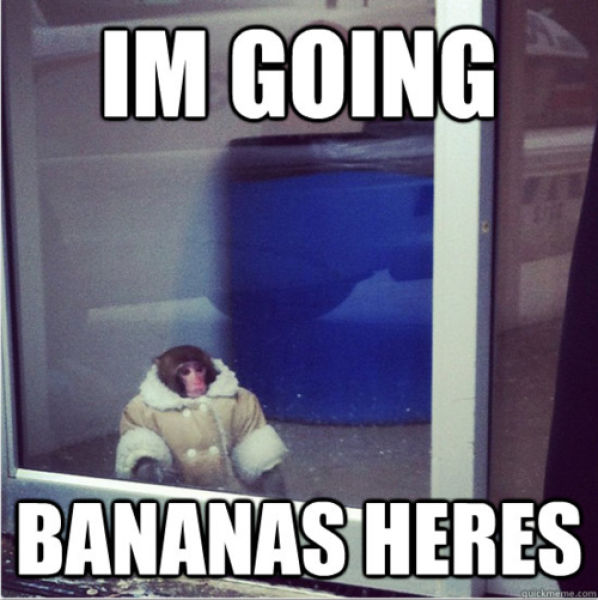 Ikea Monkey (20 pics + video)