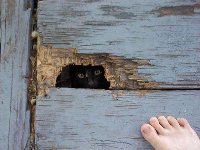 I See You… (63 pics)