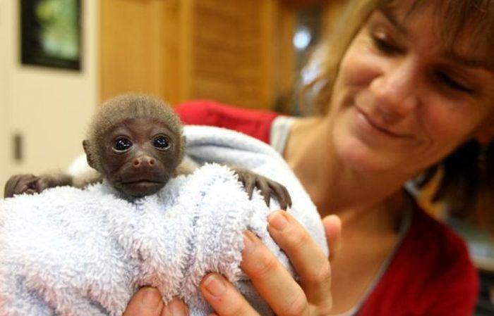 Monkey Baby (6 pics)