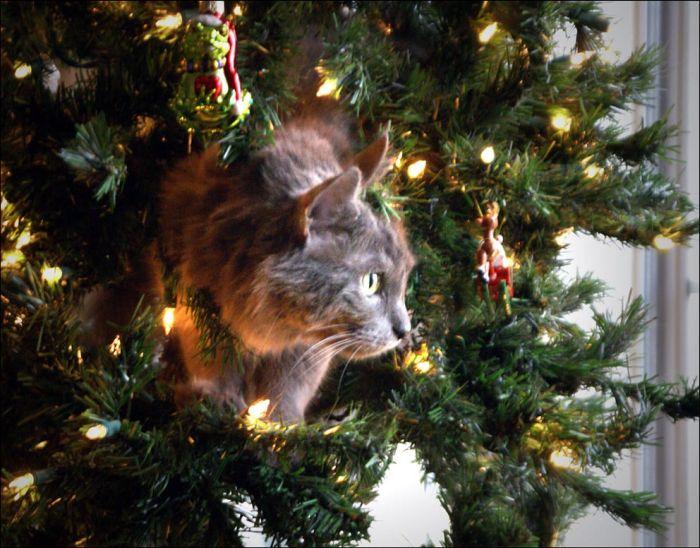Cats Love Christmas Trees (36 pics)