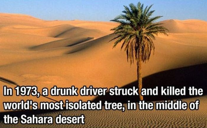 Did You Know? (29 pics)