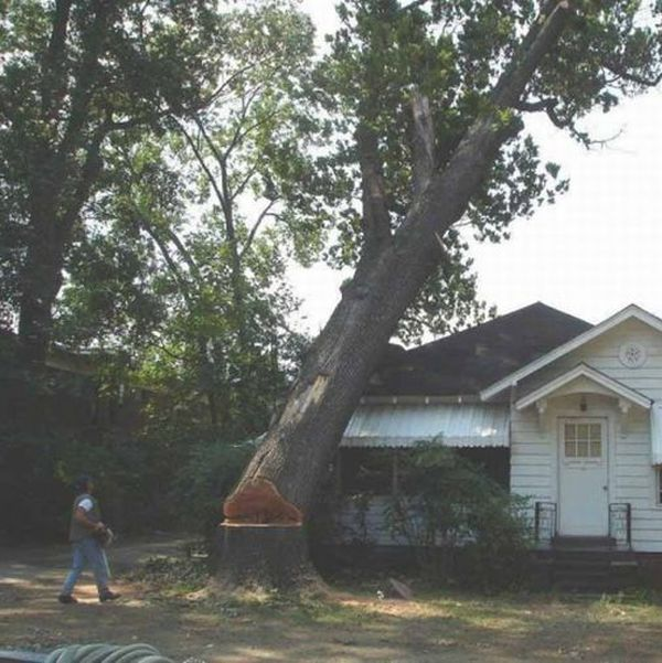 Tree Cutting Fail (4 pics)