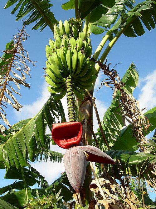 This Is Where Our Fruits Come From (16 pics)
