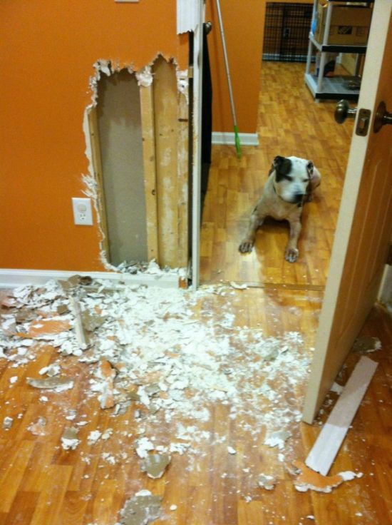 House Remodeled by a Dog (2 pics)