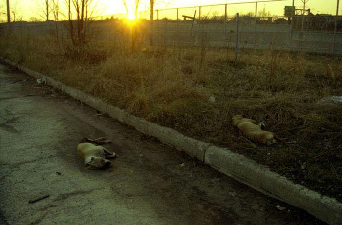 Abandoned Places of Detroit (65 pics)