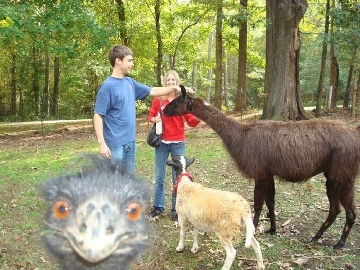 The Best Photobombs Of 2012 (34 pics)
