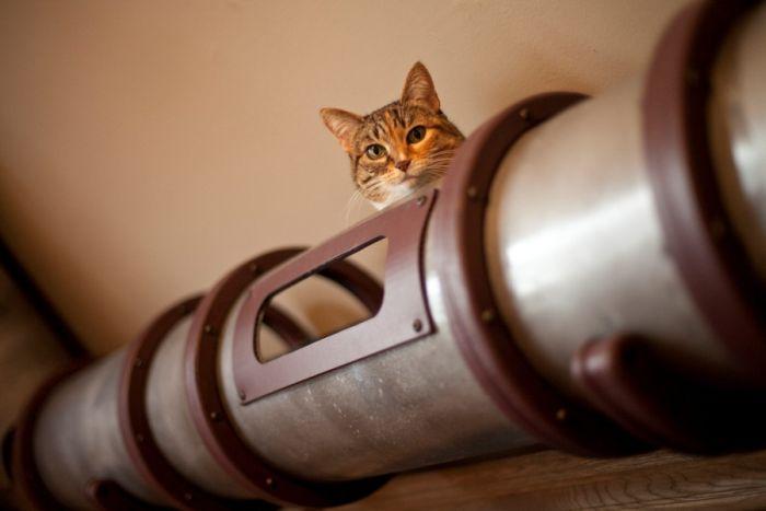 Cat Transit System (17 pics)